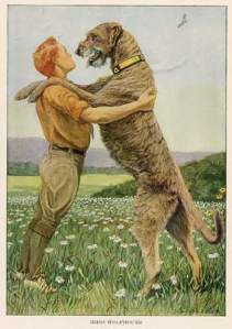 I can see how this Wolfhound could do a man in... (By Louis Agassiz Fuertes (1874-1927) (Druck ca. 1920) [Public domain], via Wikimedia Commons)