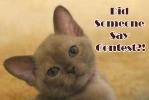 Contest-Junkie